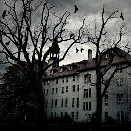 Vultures over Stella Niagara by Darya Morreale - Buildings & Architecture Public & Historical ( school, trees, night, castle, stellaa niagara, birds, vultures, historical building, selective color, pwc )