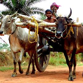 A Rural Roadside by Abhisek Joardar - Transportation Other ( child, village, road trip, indian, cart, road, travel, transportation, bull, people, travel photography, rural )