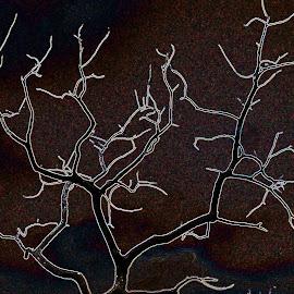 Dead Tree artistic impression by Dirk Luus - Digital Art Things ( nature, tree, plants, artistic, dead )