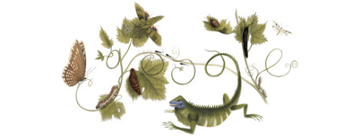 Maria Sibylla Merian's 366th Birthday