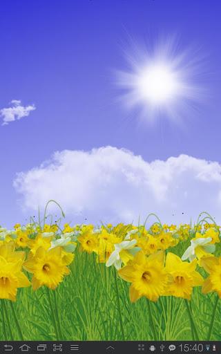 Daffodils Live Wallpaper