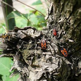 Macro insect by Drago Ilisinovic - Novices Only Macro