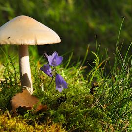 Amanita without spots by Irena Gedgaudiene - Nature Up Close Mushrooms & Fungi ( mushroom, fungi, treachery, toxic, brown, nikon d90 )