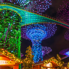 Gardens By The Bay by Aditya Permana - Public Holidays Christmas ( mood, mood factory, holiday, christmas, hanukkah, red, green, lights, artifical, lighting, colors, Kwanzaa, blue, black, celebrate, tis the season, festive, golden hour, sunset, sunrise )