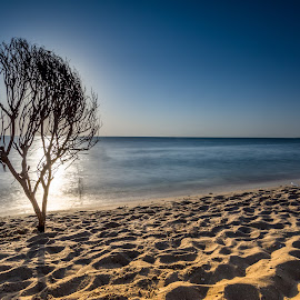 Reflections of Sun by Bakir Ali - Landscapes Beaches ( water, sand, sky, reflections, trees, sun,  )
