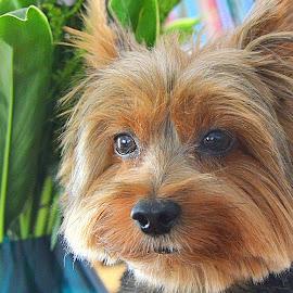 by Tupu Kuismin - Animals - Dogs Portraits