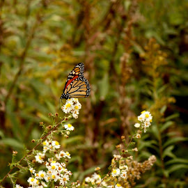 Butterfly Away by Peggy Gallups - Nature Up Close Leaves & Grasses