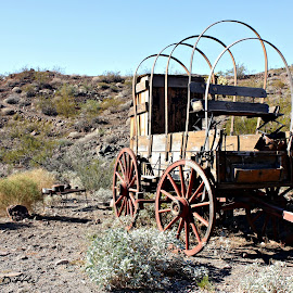 Wagon Train  by Stephanie Dibble - Landscapes Deserts