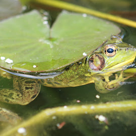 by Angie Robinson - Animals Amphibians