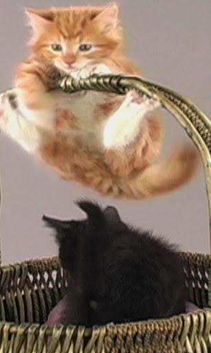 Fur Cakes - Kittens