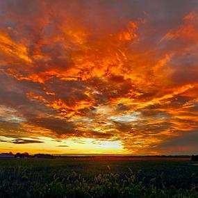 Illinois Sunrise by Julie Dant - Landscapes Sunsets & Sunrises ( illinois, sunrise, landscapes, southern illinois, wheat fields )