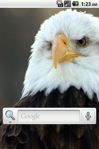 Bald Eagles Live Wallpaper