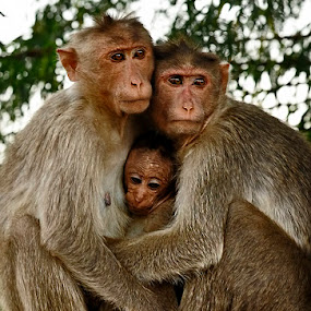 by Sathya Vagale - Animals Other Mammals ( macaque )
