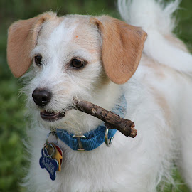 Give a dog a....stick?! by Cara Thomas - Animals - Dogs Playing ( #lovinglife, #rescuemom, #fetch, #happy, #cute, #love, #funinthesun, #adoptdontshop, #puppy )