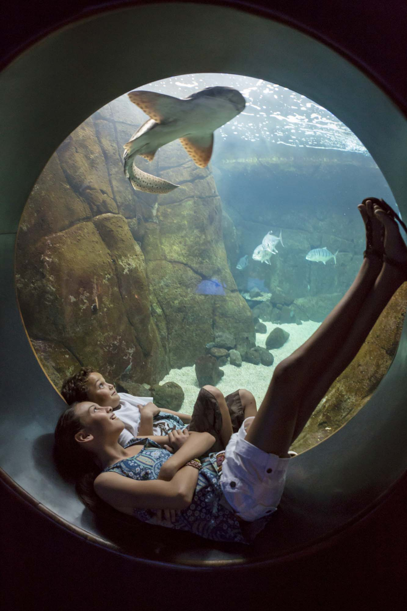 Kids watch a shark in an exhibit at the Waikiki Aquarium.
