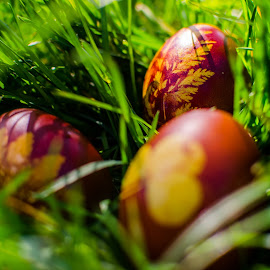 Easter is here :) by Sortan Luca Bogdan - Food & Drink Cooking & Baking