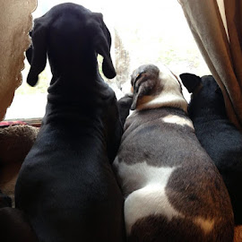 3 Buddies in the window by Theresa Campbell - Novices Only Pets