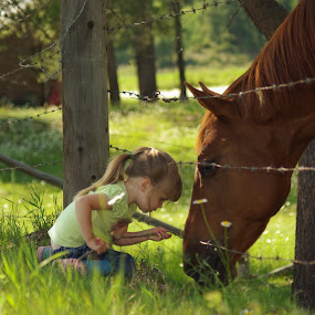 I like your whiskers by Giselle Pierce - Babies & Children Children Candids ( child, fence, little girl, horse, summer, flowers, gelding )