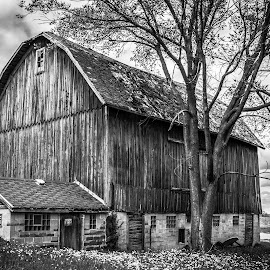 Red barn in black and white by Tommie Davis - Buildings & Architecture Other Exteriors ( blackandwhite, black and white, farms, barns, landscape, rural )