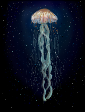 Deep Sea Jellyfish