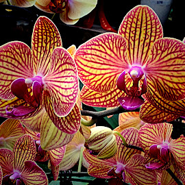 Orchid by Janette Ho - Instagram & Mobile iPhone (  )