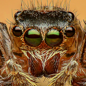 The Eyes by Dave Lerio - Animals Insects & Spiders