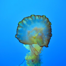 Green Jelly by Amanda Hunter - Animals Sea Creatures ( blue, green, ocean, pretty, jellyfish )