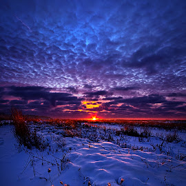 All The Dreams I Used To Know by Phil Koch - Landscapes Prairies, Meadows & Fields ( vertical, farmland, yellow, leaves, crop, love, sky, tree, nature, autumn, snow, perspective, orange, art, twilight, agriculture, horizon, portrait, environment, winter, dawn, serene, trees, lines, farm field, inspirational, wisconsin, natural light, ray, landscape, phil koch, sun, photography, farm, horizons, inspired, clouds, office, park, green, scenic, morning, shadows, field, red, fog, blue, sunset, peace, meadow, summer, beam, sunrise, earth, mist )