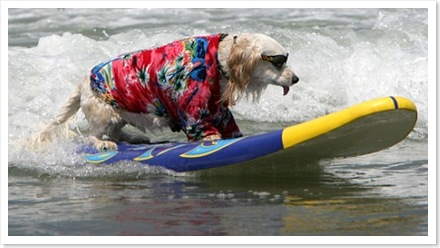 dogsurf1