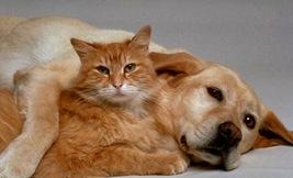 cat-dog-7