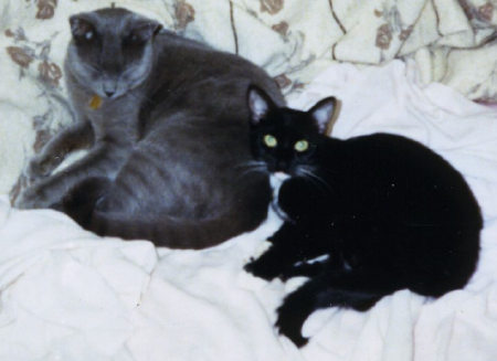 Our new cat, Zyelena, curled up with Phillip in 1987.