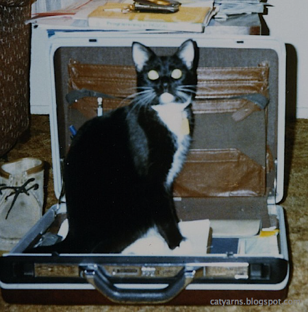 Zyelena sitting in a briefcase, ready to go to work.