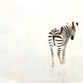 I See You by Bjørn Borge-Lunde - Digital Art Abstract ( wild animal, wilderness, nature, sebra, wildlife, africa )