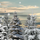 Winter Snow Trees 3D Trial LWP icon