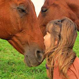 Kiss by Kirsi Bertolini - Animals Horses (  )