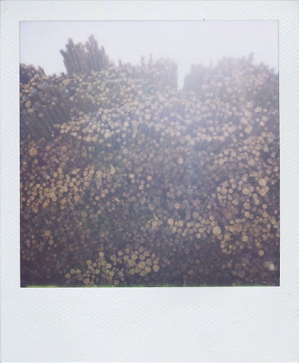 Erin Curry- stacked log polaroid 2