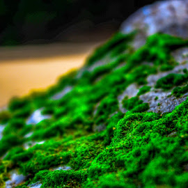Mossy Rock by Justin Burger - Nature Up Close Mushrooms & Fungi ( green, moss, summer, rock, beach )