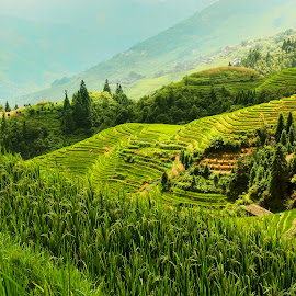 Paddy on the hill by Muhasrul Zubir - Landscapes Travel