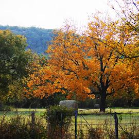 by Tammy Townsend-Haehn - Landscapes Prairies, Meadows & Fields