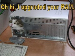 oh hi i upgraded your ram lolcat
