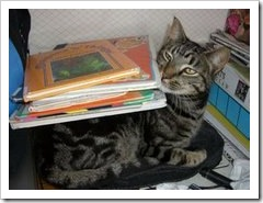 Merlin and books
