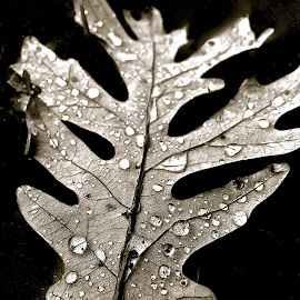 Leaf with iPhone in Black and White by Tyrell Heaton - Instagram & Mobile iPhone ( leaf with iphone in black and white )