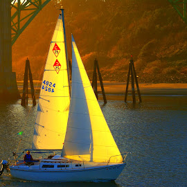 Sail boat  returning by Gaylord Mink - Sports & Fitness Watersports ( shore, water, harbor, sails, sail boat,  )