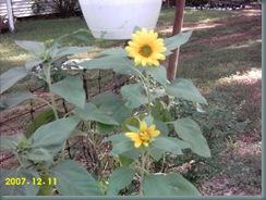garden july 08 011