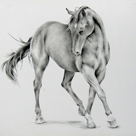 The Filly by Alicia McNally - Drawing All Drawing ( equine, horse drawing, horse, quarter horse, horse art )