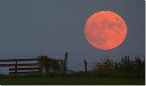 Harvest_moon