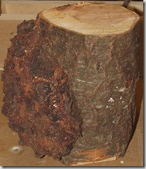 Burl 2