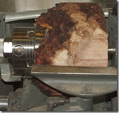 Burl 6