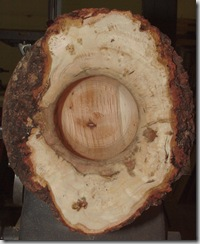 Burl 10