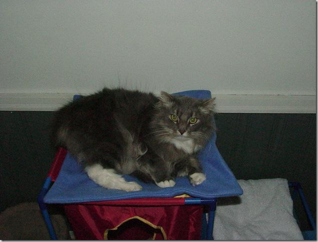 Cat Mat 002
